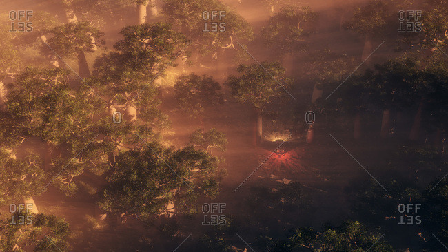 Aerial view of vehicle driving through dense tropical forest with sunlight streaming through the trees at dusk