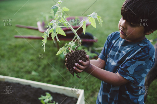 A little boy holds a seedling by the roots