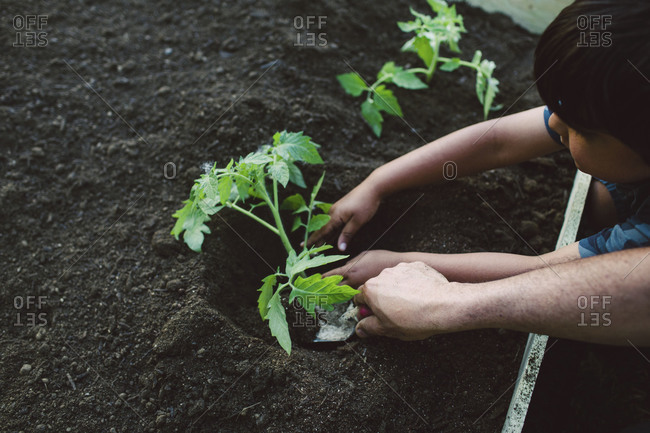 A father helps his son plant a vegetable plant