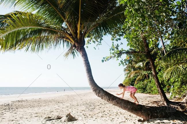 A girl climbs up a palm tree trunk on the beach