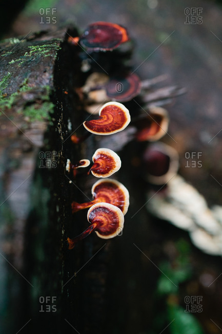 Mushrooms grow from a log