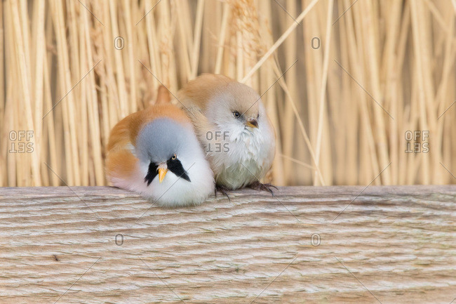 Two birds sitting together on branch