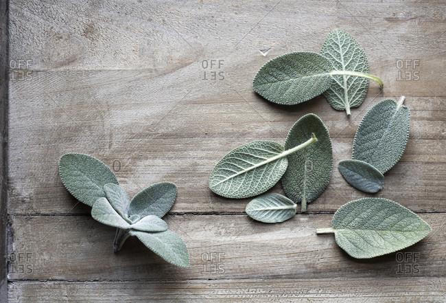 Sage leaves on weathered wood