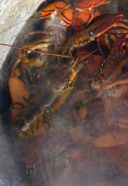 Lobsters in the process of steaming during a lobster bake