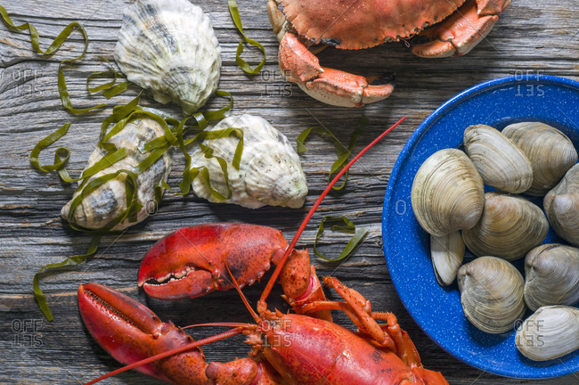 Maine lobster, crab, oysters, kelp and clams on weathered wood