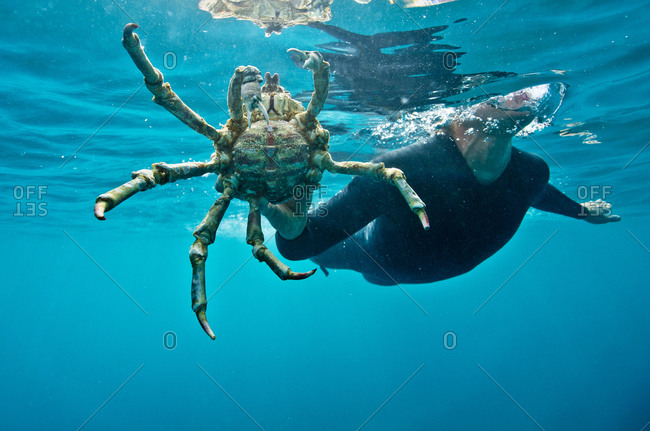 A girl in a wetsuit holds a crab underneath the water