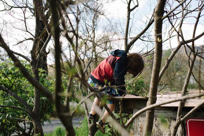Boy climbing up a tree