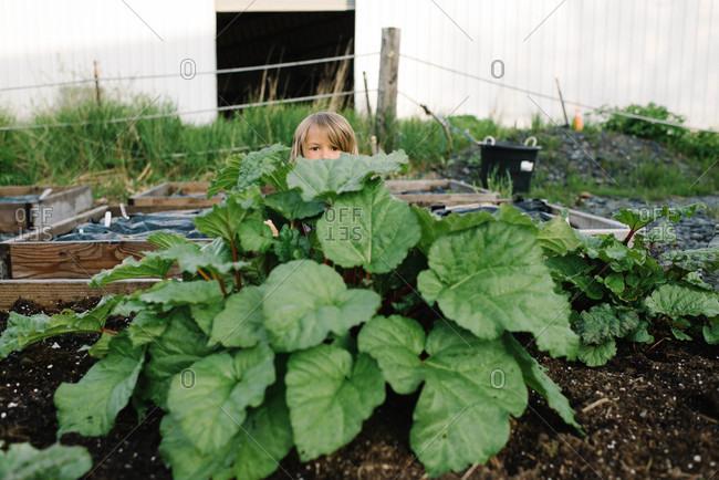 Boy hiding behind rhubarbs in a garden