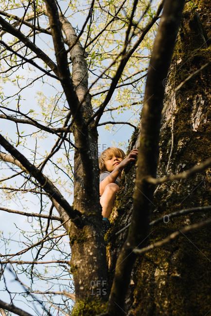 Low angle view of boy climbing up a tree