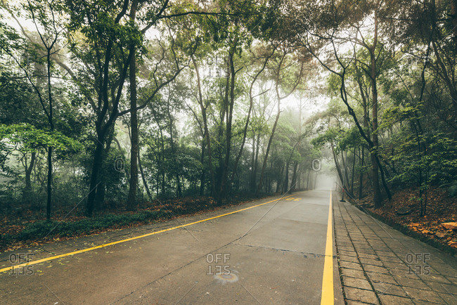 Road running through Chinese forest
