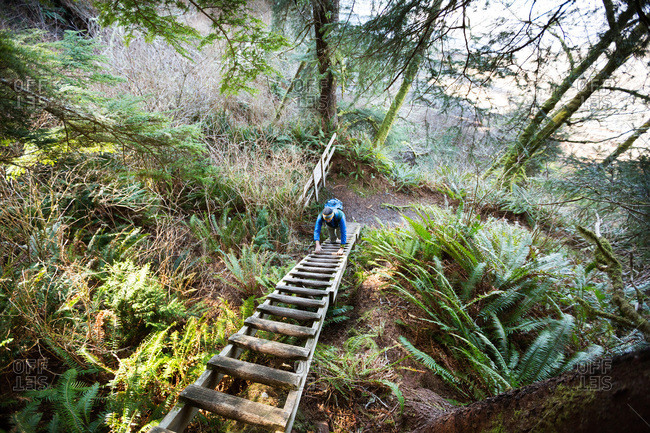Hiker climbing up a wooden ladder that is part of a hiking trail on Vancouver Island