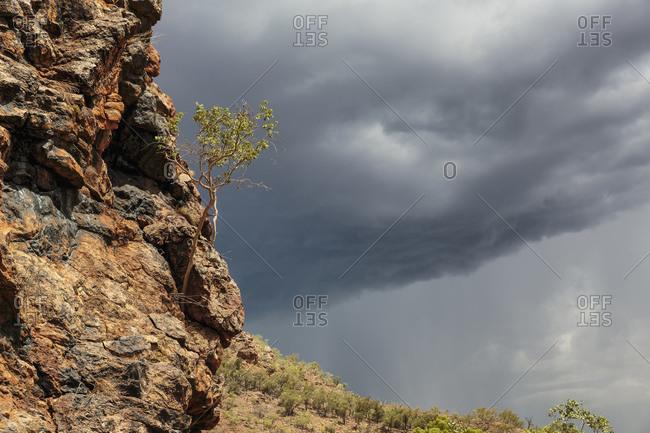 Rare dessert rains in the Australian bush