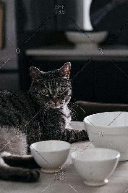 A cat sits on a table next to bowls