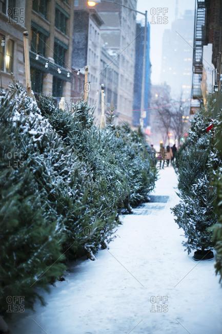 Christmas tree lot in city