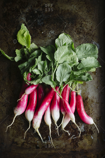 French breakfast radishes on a tray