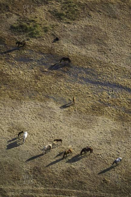 Free range horse herd in Colorado