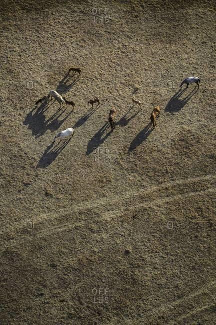 Horses grazing in Colorado field