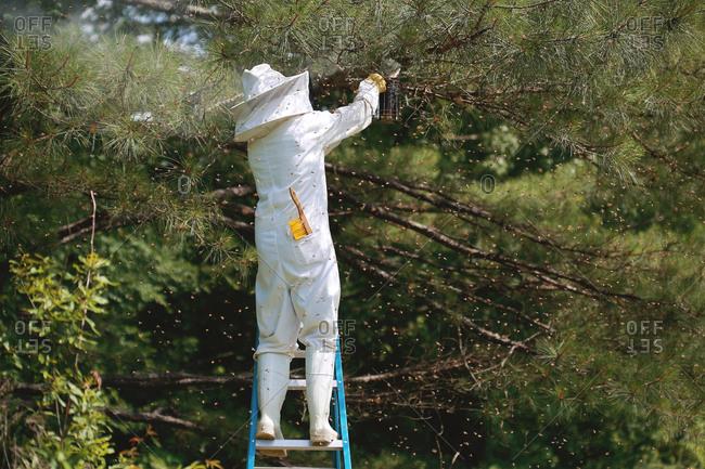 Beekeeper smoking a bee swarm