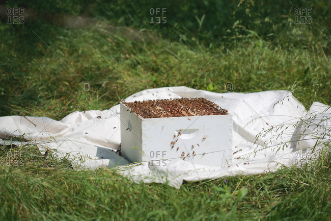 Bees and an apiary hive