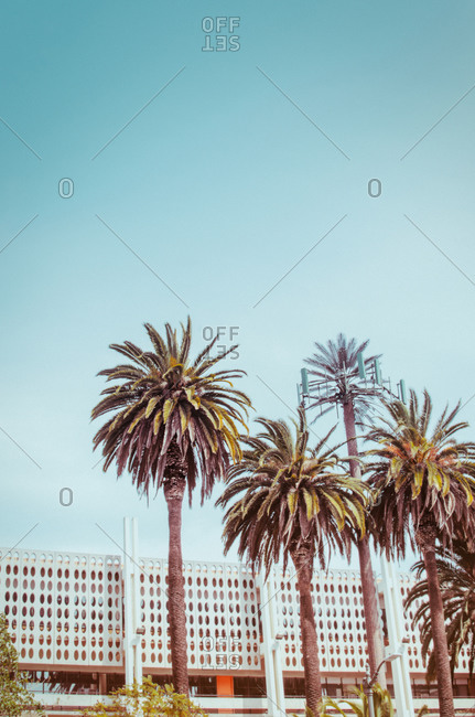 Palm trees in front of a modern building