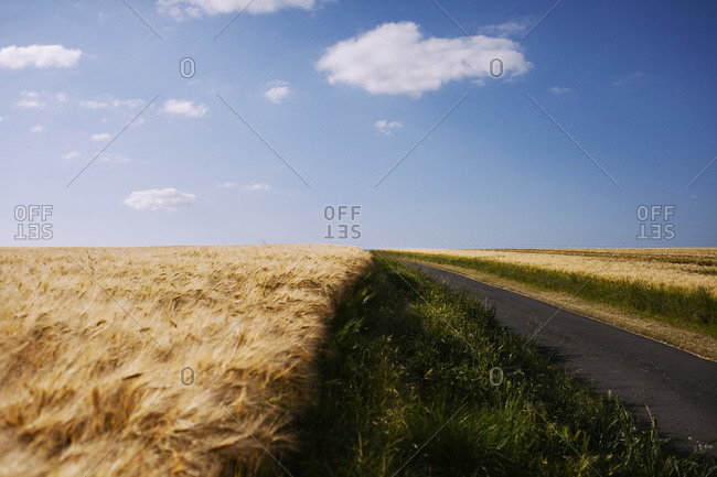An empty road next to a field of wheat