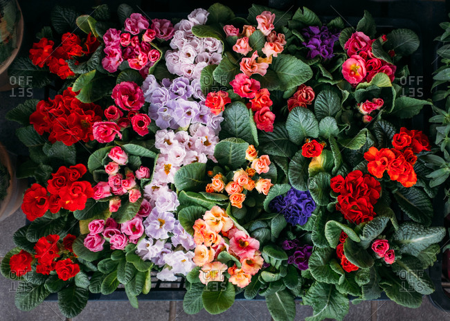 Flowers for sale at a market in Japan