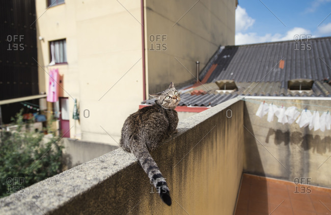 Tabby cat on balustrade of a terrace