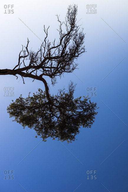 A branch of a tree in Namibia