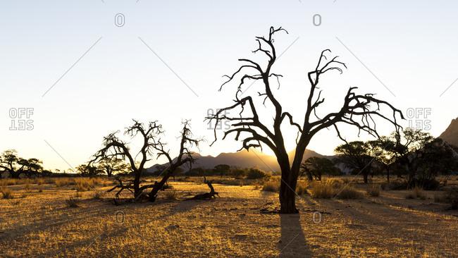 The sun setting over the Namibian savanna