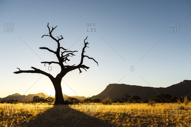 The sun setting over the savanna in Namibia