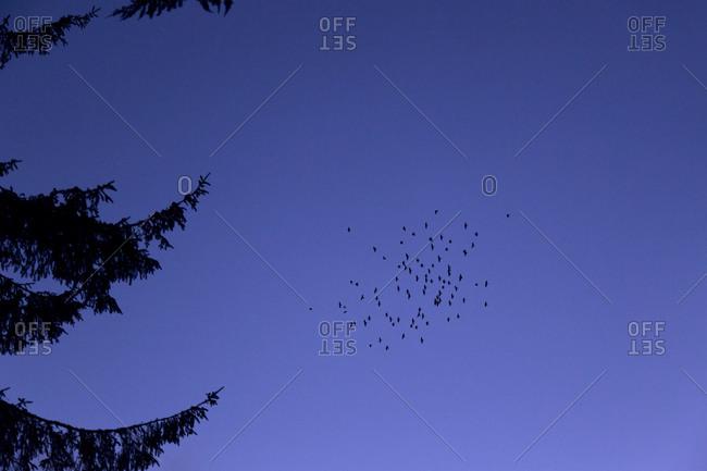 Birds flying high in the blue sky