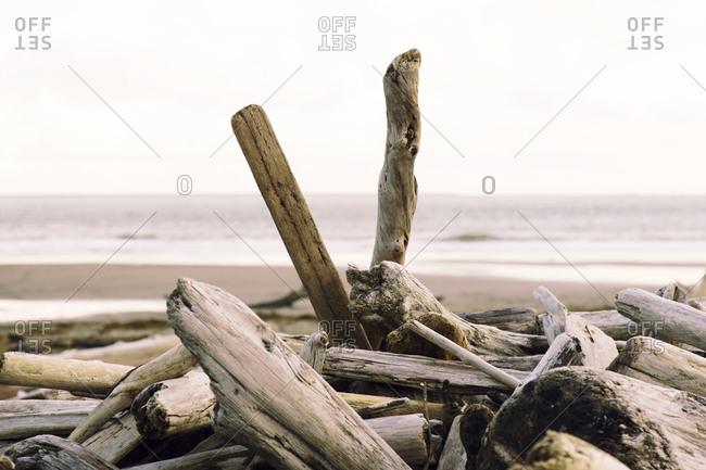Driftwood on a coast - Offset