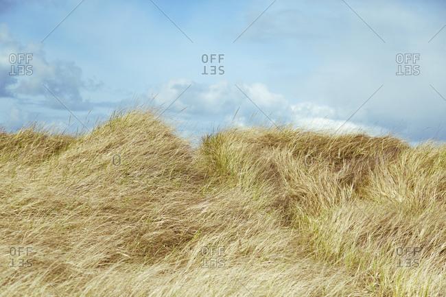 Grassy field in Oregon, USA