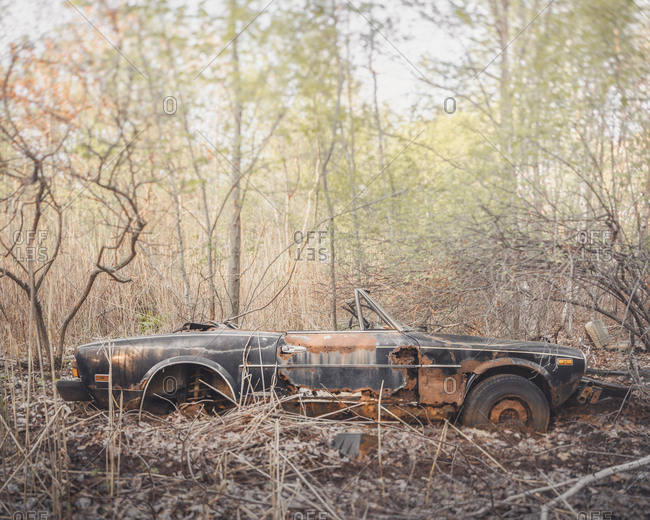 Rusted out car in the woods