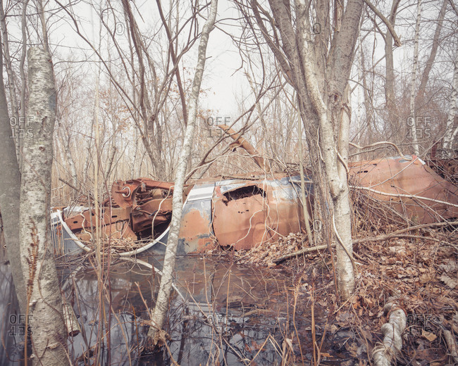 Abandoned car wreck in a marsh