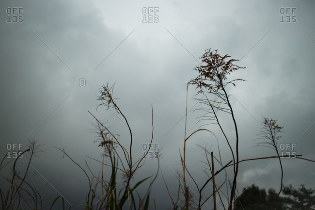 Plants and overcast sky in Honjohigashi, Japan