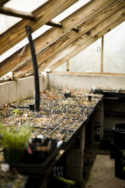 New seedlings in a greenhouse