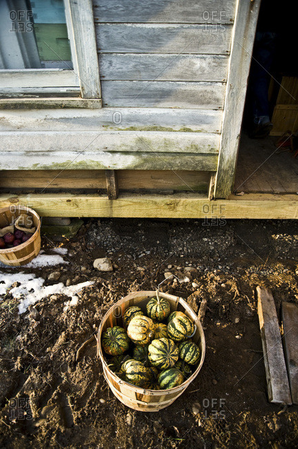 A barrel of gourds outside of a barn