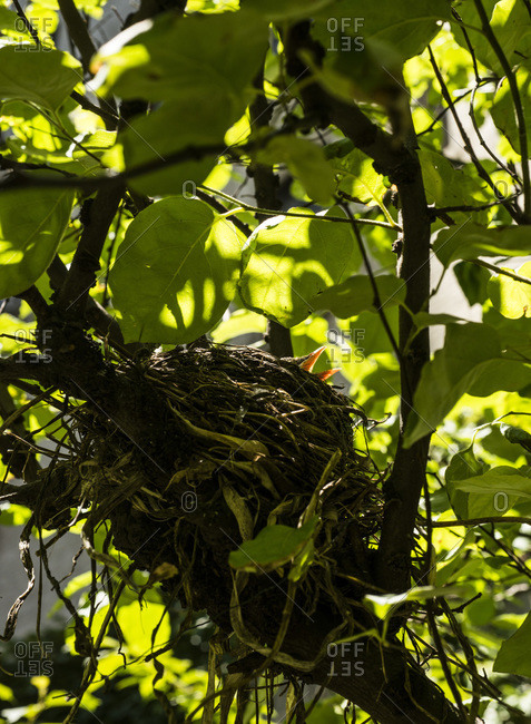 A bird in a nest in a rooftop garden in New York City