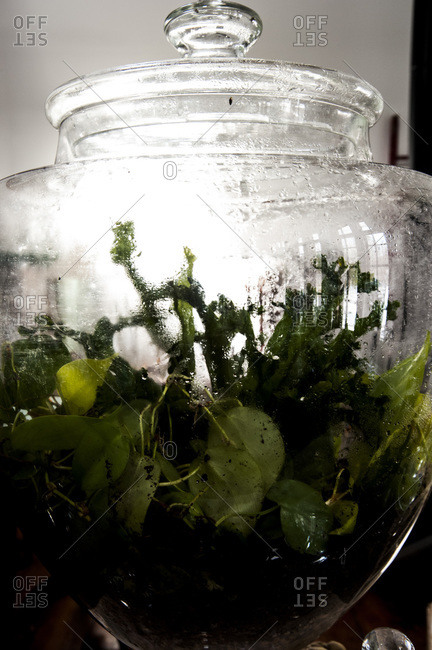 Plants growing in a damp terrarium