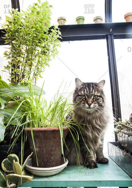 A cat sits next to a catnip plant