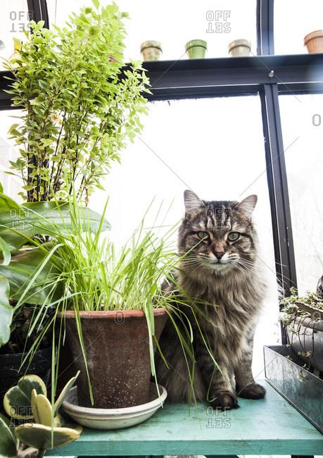 A cat sits next to a catnip plant