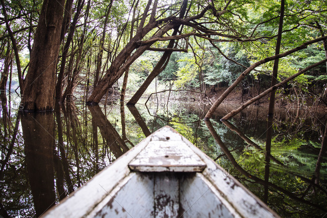 Bow of wooden boat in a flooded forest