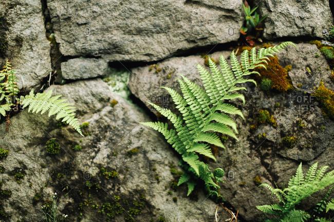 Ferns growing on a rock