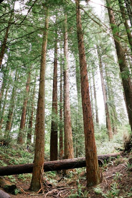 A fallen log in a forest