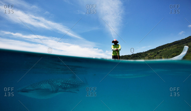 Whale shark by man on boat