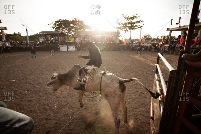 Masbate, Philippines - April 10, 2013: Cowboy riding bull in rodeo, Philippines