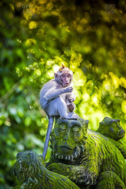 Monkey at Sacred Monkey Forest sitting on monkey sculpture, Ubud