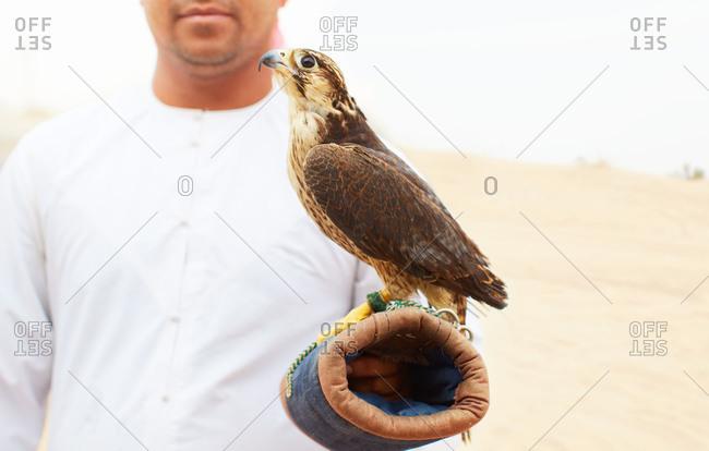 A man with a pet falcon near Dubai, UAE