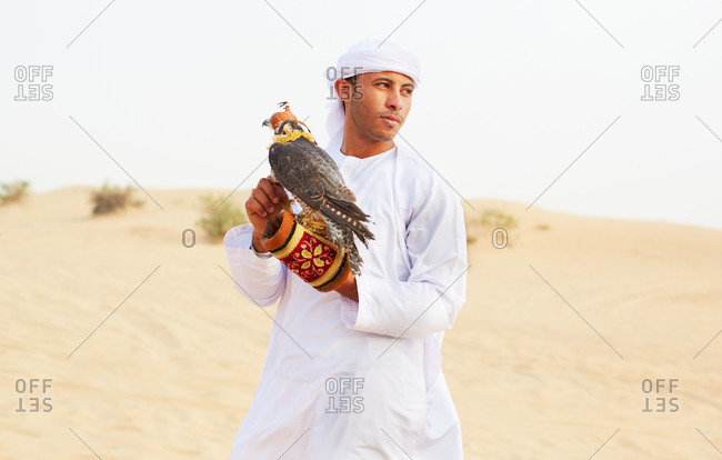 Dubai, United Arab Emirates - March 20, 2015: A man holds a falcon wearing a hood in the desert